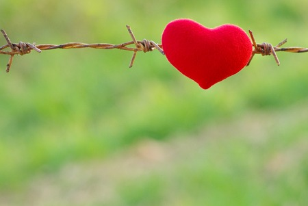 forbidden love: red heart and barbed wire. Love Stock Photo