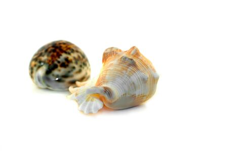 discarded: Two discarded shells on white background