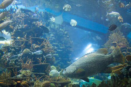 fish type: The aquarium fish