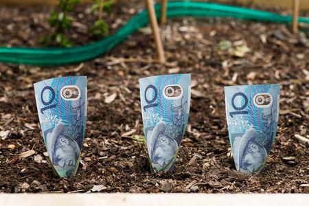 Planting Australian money $10 in Garden Bed