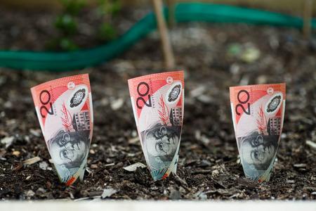 Planting Australian money $20 in Garden Bed Stock Photo