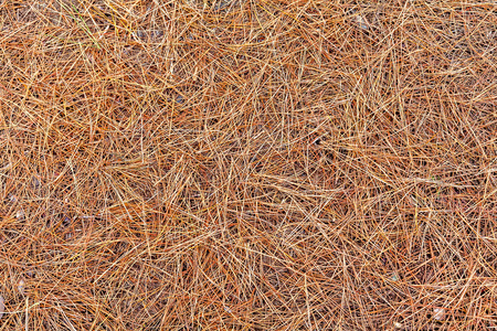 forest mulch stock photos & pictures. royalty free forest mulch