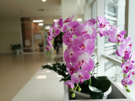mauve: Purple orchids, Violet orchids. Orchid is queen of flowers in building Thailand
