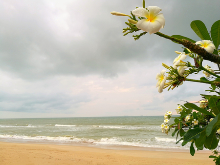 White flower. Wave Of Ocean On Sandy Beach and sunset light after rain Background Stock Photo