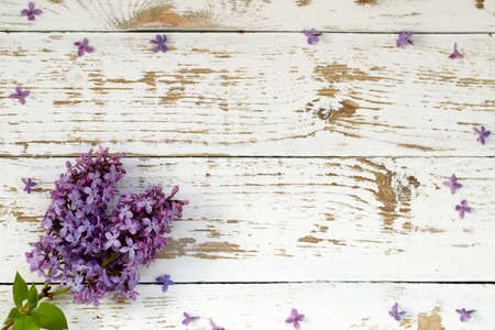 Purple lilac bush. Background with space for text. Stock Photo