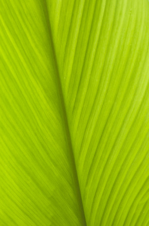 green leaf texture background.selective focus.