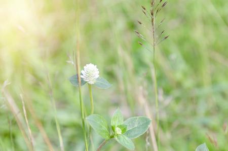 White flower on green leaf background