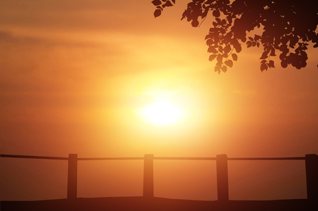 Sunset background with tree outdoor landscape design nature