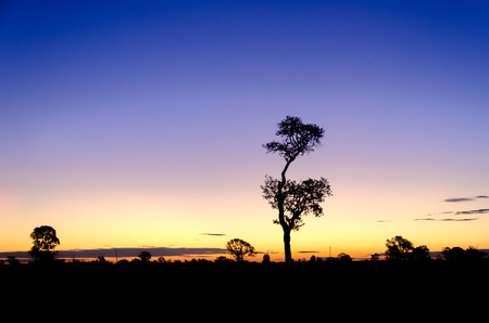 Tree silhouette at Sunrise in Thailand. 스톡 콘텐츠