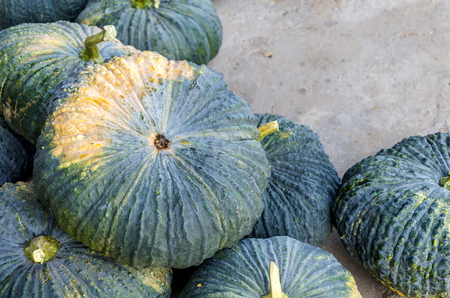 Kabocha, type of hybrid squash in grocery basket