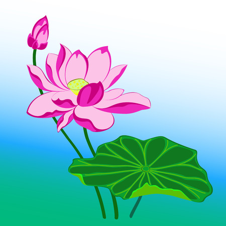 bourgeon: pink lotus flower with leaf and bud