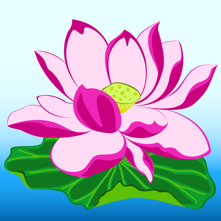 aquatic herb: pink lotus flower with leaf and bud