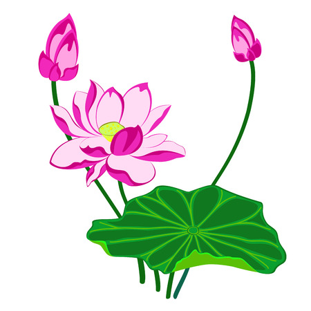 pink lotus flower with leaf and bud, isolated illustration