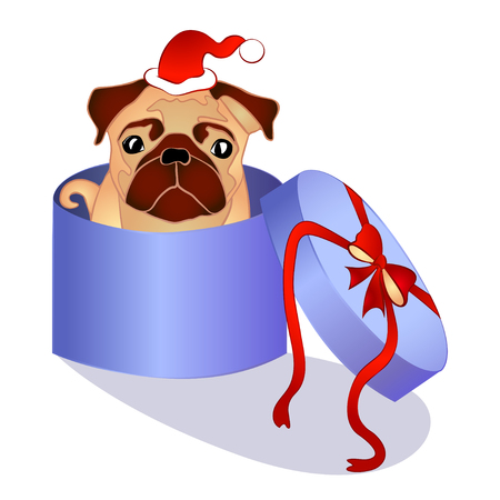 pug dog: pug dog in the box, christmas present, vector illustration
