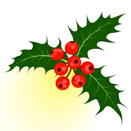 ilex: Holly berry or ilex plant. Christmas symbol vector illustration