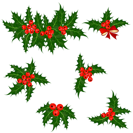 holly leaf: Holly berry or ilex plant. Set of Christmas symbol vector illustrations Illustration
