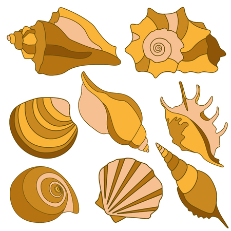 conch shell: sea shells - scallop, shell, conch, mollusk. Isolated illustration on white