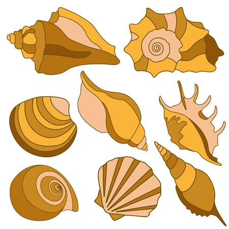 mollusk: sea shells - scallop, shell, conch, mollusk. Isolated illustration on white