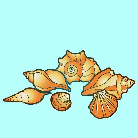 sea shells, Illustraion with scallop, conch and mollusk