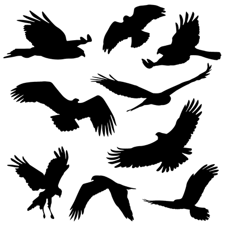 wingspan: Set of silhouettes. Eagle and other big birds. Isolated on white background. Vector illustration. Illustration