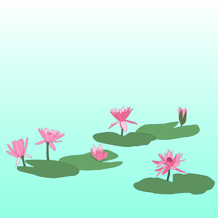 waterlily: pink lotus flowers with leafs on water, vector illustration Illustration