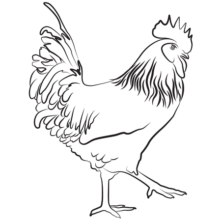 barndoor: Cock. Symbol of Chinese New Year. Vector illustration. In full growth.