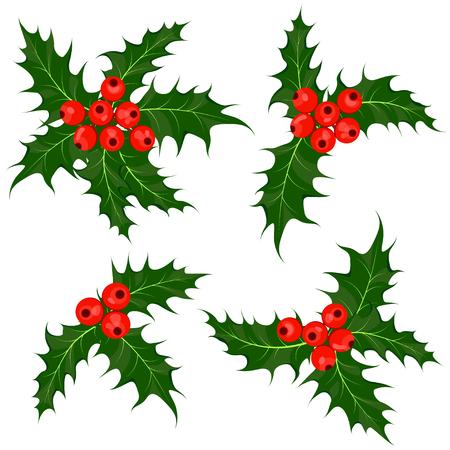 ilex: Holly berry or ilex plant. Mistletoe. Set of Christmas symbol vector illustrations