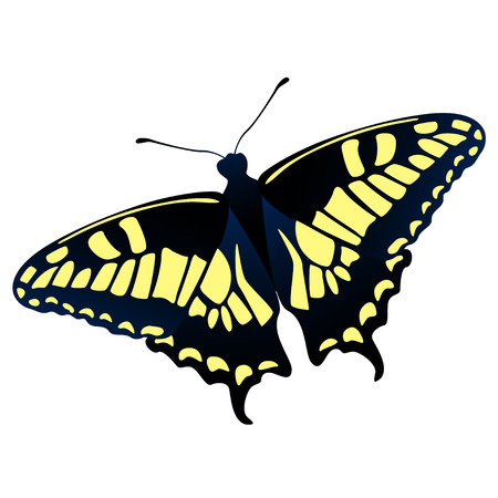 swallowtail: Old World swallowtail - Papilio machaon - butterfly vector illustration
