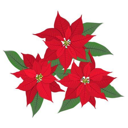 Red Christmas flower poinsettia. Isolated on white. Vector eps 10.