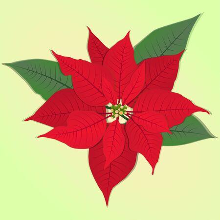 poinsettia fiore rosso. Illustrazione vettoriale. simbolo di Natale