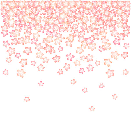 Falling Japanese cherry blossom vector background. Japanese cherry, sakura flower cartoon illustration. Can be used as apricot blossom background. Spring background design in pink. Tender flower bloom