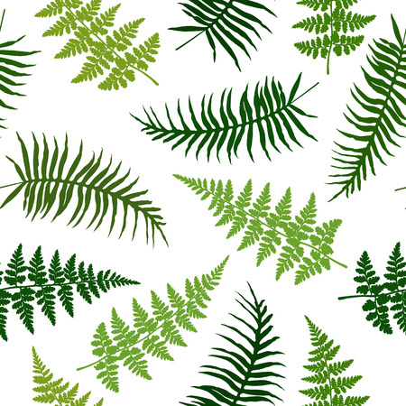 Fern frond isolated seamless vector illustration, green tropical forest plant leaves on white background. Detailed ferns drawing, textile print. Jungle or garden herbs, brachen grass, foliage.  イラスト・ベクター素材
