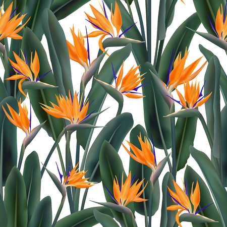 Strelitzia Reginae blossom also known as crane flower or bird of paradise Vector seamless pattern. South Africa flowering plant background illustration on white. Fabric print, textile, wrapping paper.