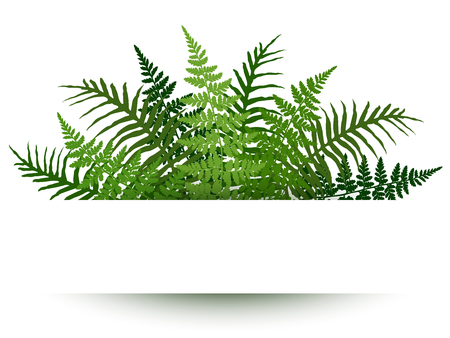 Fern frond frame vector illustration. Polypodiophyta plant leaves decoration on white background. Detailed bracken fern drawing, tropical forest herbs, fern frond grass card border.