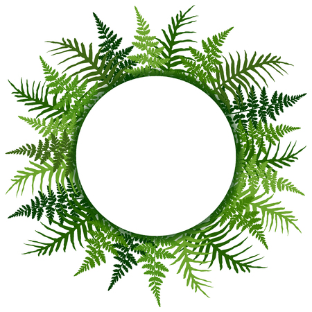 Fern frond tropical leaves frame vector illustration. Bush plant leaves decoration on white background. Green bracken and new zealand fern tropical forest herbs, fern frond grass card circle border Illustration