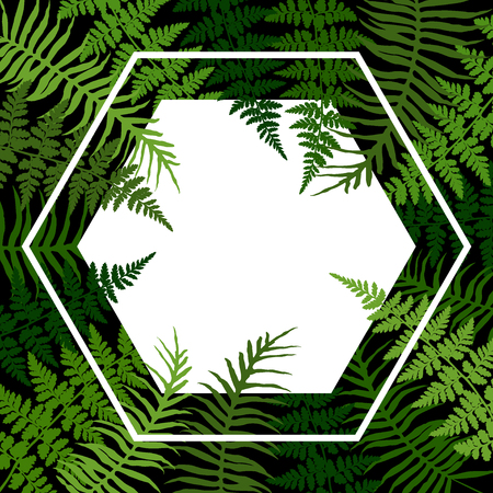Fern frond tropical leaves frame vector illustration. Bush plant leaves decoration background. Green bracken and new zealand fern tropical forest herbs, fern frond grass hexagon card border. Ilustração