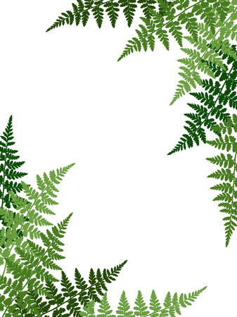 Fern frond tropical leaves frame vector