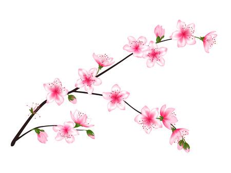 Frühlingsblüten-Baumzweig mit rosa Blumen, Knospenvektorillustration. Realistisches Design isoliert auf weiss. Bloom Kirschbaum Zweig Set, Pflaumenblüte. Apfel, Pfirsich, Sakura, Aprikosenblütenzweig.