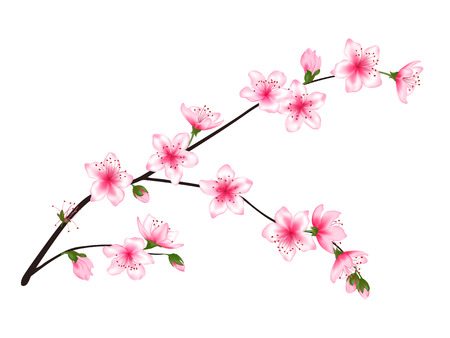 Spring bloom tree branch with pink flowers, buds vector illustration. Realistic design isolated on white. Bloom cherry tree twig set, plum blossom. Apple, peach, sakura, apricot flowering branch.