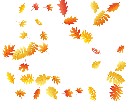 Oak, maple, wild ash rowan leaves vector, autumn foliage on white background. Red gold yellow rowan and oak autumn leaves. Falling tree foliage fall season specific background.