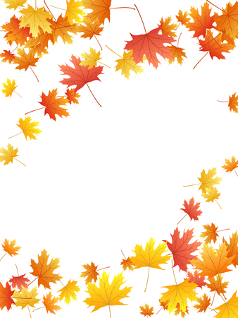 Maple leaves vector background, autumn foliage on white graphic design. Canadian symbol maple red orange yellow dry autumn leaves. Biological tree foliage fall season specific background.