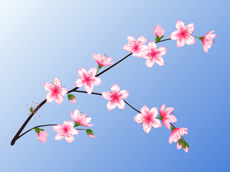 Peach blossom branch vector illustration. Blooming twig isolated on blue sky background, springtime tree flower blossoms seasonal design. Awesome spring flowering tree branch vector. 일러스트