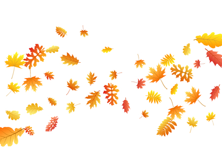 Oak, maple, wild ash rowan leaves vector, autumn foliage on white background. Red orange yellow rowan dry autumn leaves. Falling tree foliage november seasonal background. Illustration