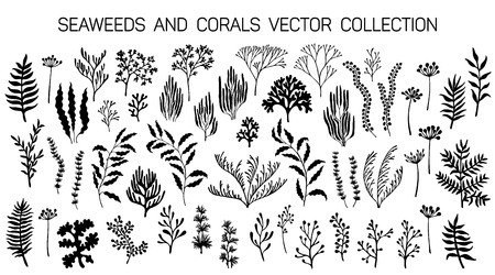 Seaweeds and coral reef underwater plans vector collection. Aquarium, ocean and marine algae water plants, corals isolated on white. Black seaweeds and polyps silhouettes set. Laminaria kelp and other Illustration