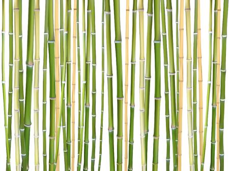 Bastoncini di bambù sfondo vettoriale illustrazione. Elementi di design in legno naturale per prodotti ecologici. Bastoni di bambù marrone verde dell'albero isolati su priorità bassa bianca. Materiale della stuoia di legno.