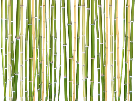 Ilustración de fondo de vector de palos de bambú. Elementos de diseño de material de madera natural para productos ecológicos. Palos de árbol de bambú verde marrón aislado sobre fondo blanco. Material de estera de madera.
