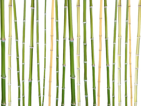 Bamboo sticks vector background illustration. Design elements of natural wooden material for eco friendly goods. Green brown bamboo tree sticks isolated on white background. Wooden mat material.