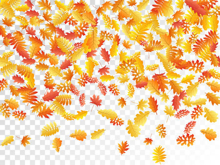Oak, maple, wild ash rowan leaves vector, autumn foliage on transparent background. Red gold yellow ash and oak autumn leaves. Cool tree foliage fall seasonal background pattern.