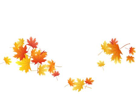 Foglie di acero sfondo vettoriale, fogliame autunnale su bianco illustrazione. Simbolo canadese acero rosso arancio oro foglie secche autunnali. Modello di sfondo stagionale caduta fogliame albero botanico. Vettoriali