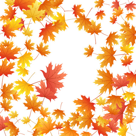 Maple leaves vector background, autumn foliage on white illustration. Canadian symbol maple red orange yellow dry autumn leaves. Fantastic tree foliage vector october seasonal background.
